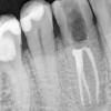 poznań stomatolog stomatolog poznań